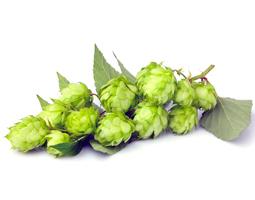 Luppolo Birra Artigianale